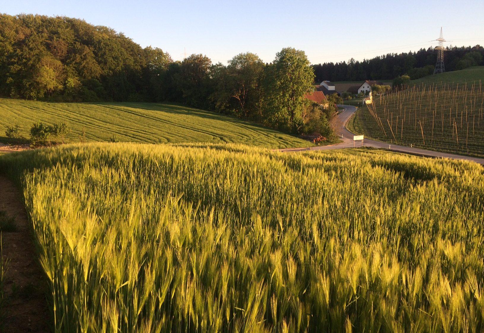 the village of Brunn